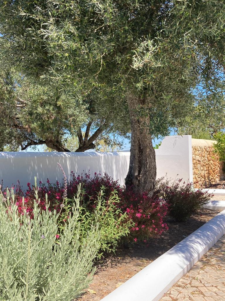 garden landscape designs project management algarve earth and clay algarve22